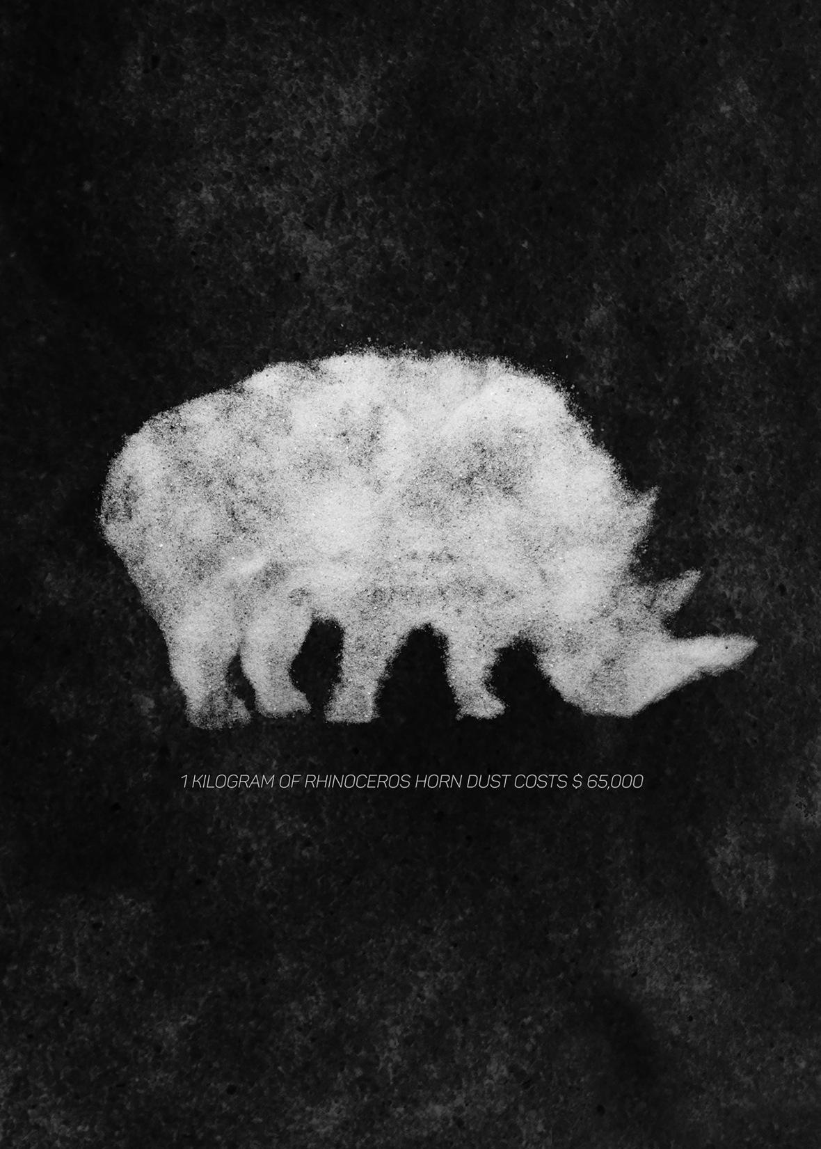 Rhinocero Horns - Santiago Gomez
